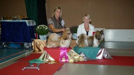 Tibethundjunior