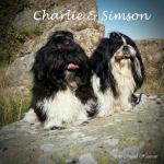 Charlie & Simson sitter på klipporna i Bornholm