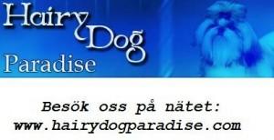 HairyDog1